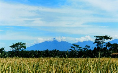 44182672-H1-Batukaru_Mountain