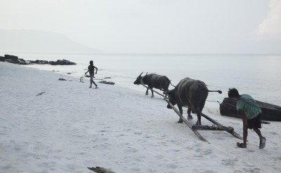 children with buffalos on Koh Rong beach_8780