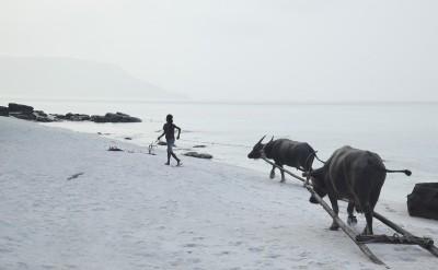 girl with buffalos on Koh Rong beach_8780