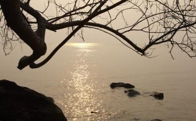 nature - sunrise and tree_5795