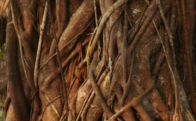 nature - tree trunk detail_5818