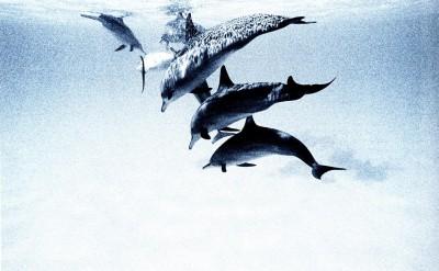 44154838-H1-Dolphins-Quick Preset_1445x1000