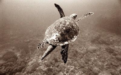 44154847-H1-Turtle-Quick Preset_1497x1000