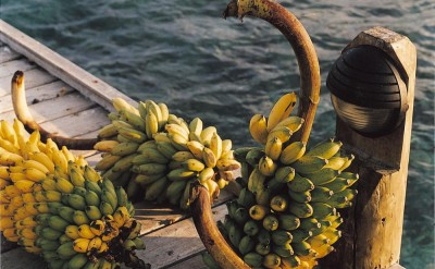 44161494-H1-Bananas-Quick Preset_1000x1253