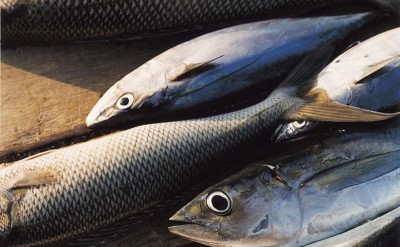 44161530-H1-Fish-Quick Preset_1000x1253