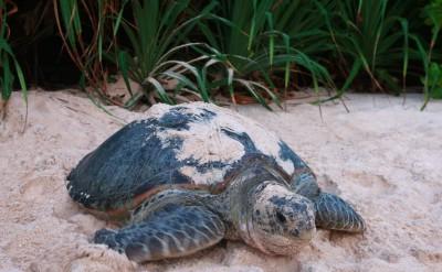 Turtle_[85-LARGE]