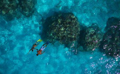 coral-garden-04