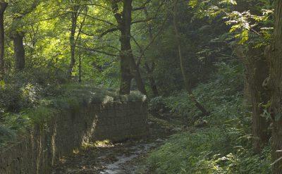 Fayun Stream