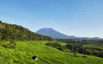 rice fields mount agung 1.tif