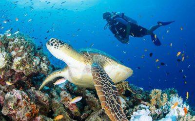 Movenpick_Resort_Kuredhivaru_Maldives介绍-157