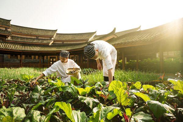 975x660_Farm2Fork_organic_garden_640x450